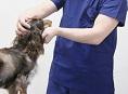 動物病院のM&A/会社売却の写真